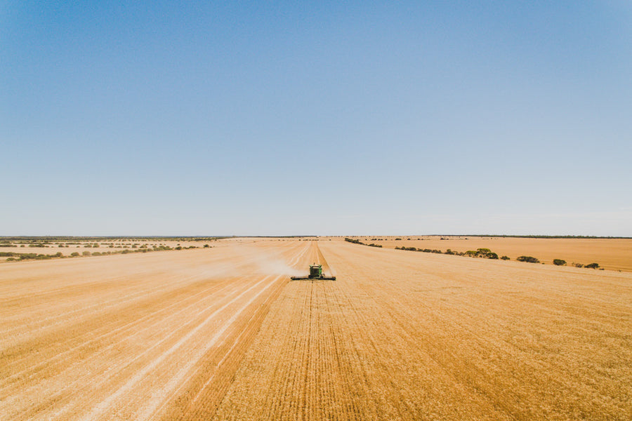 Harvesting wheat aerial photo