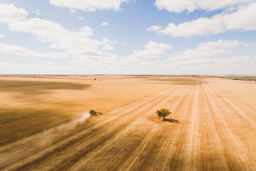 Aerial photo of harvest