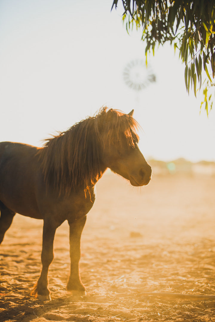 Pony at golden hour