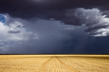 Thunderstorm over farmland