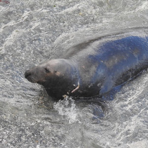 Wild Seal Supporter - Adoption Pack