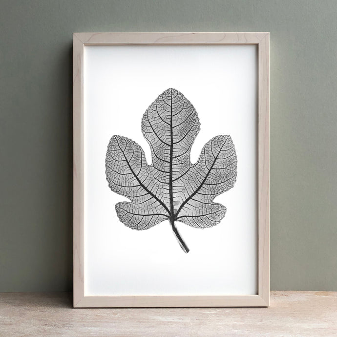 Fig Leaf Print | Black | Green