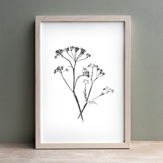 Cows Parsley Plant Print | Black | Green