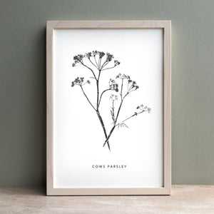 Cows Parsley Print | Black
