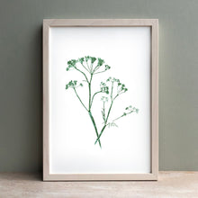 Load image into Gallery viewer, Cows Parsley Print | Black | Green