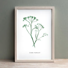 Load image into Gallery viewer, Cows Parsley Print | Green
