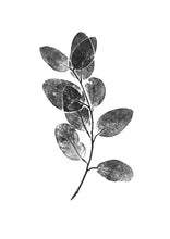 Load image into Gallery viewer, Eucalyptus Sprig Print | Black | Blue | Green