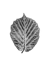 Load image into Gallery viewer, Hazel Leaf Print | Black | Hazel