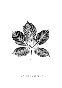 Horse Chestnut Leaf Print | Black