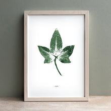 Load image into Gallery viewer, Ivy | Green