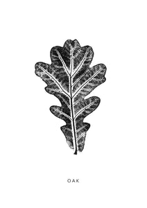Oak Leaf | Black
