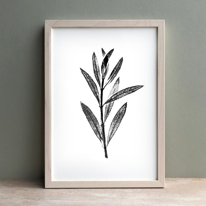 Olive Leaf Print | Black | Green