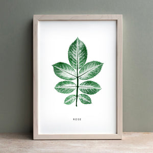 Rose Leaf | Green