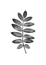 Load image into Gallery viewer, Rowan Leaf Print | Black | Green