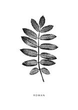 Load image into Gallery viewer, Rowan Leaf | Black