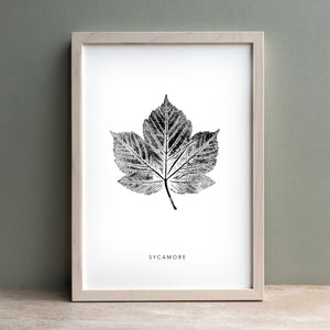 Sycamore Leaf Print