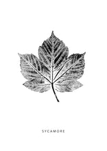Load image into Gallery viewer, Sycamore Leaf Print