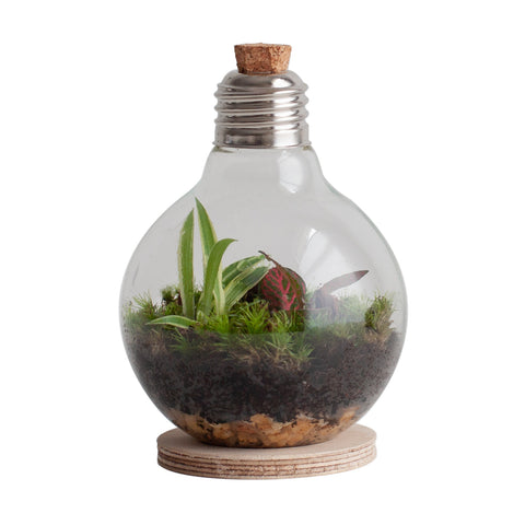 a lightbulb terrarium on plywood stand