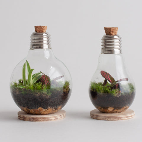 two lightbulb terraniums