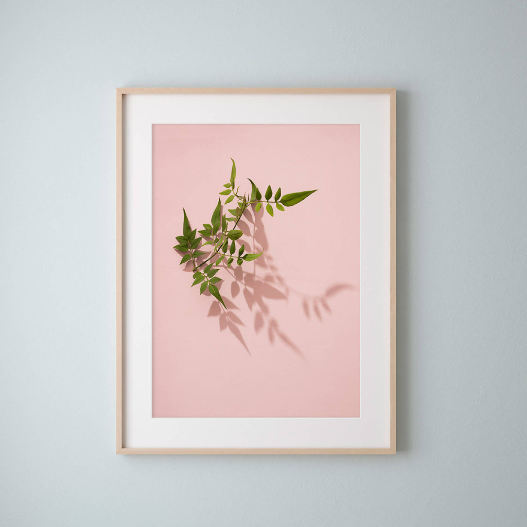 Elegant framed print of green Jasmine leaves on pink by UK botanical photographer and artist