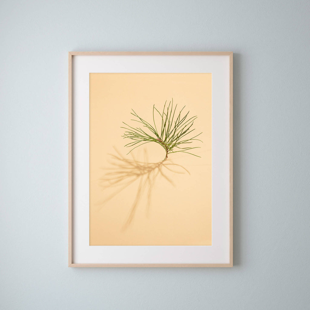 Framed botanical artwork, featuring a pine tree cutting on a vibrant yellow background from a series by UK artist Emma Robinson