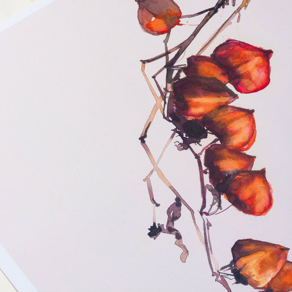 detail of a watercolour drawing of physalis