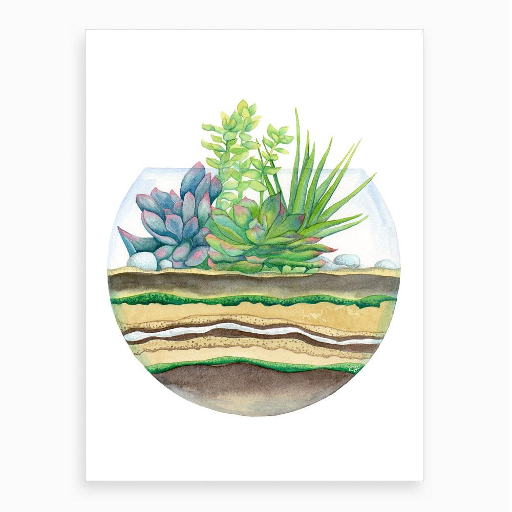 watercolour picture of a round terrarium with a complete profile of the plants and soil levels
