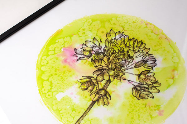 close up detail of circular pink and green watercolour painting of a allium