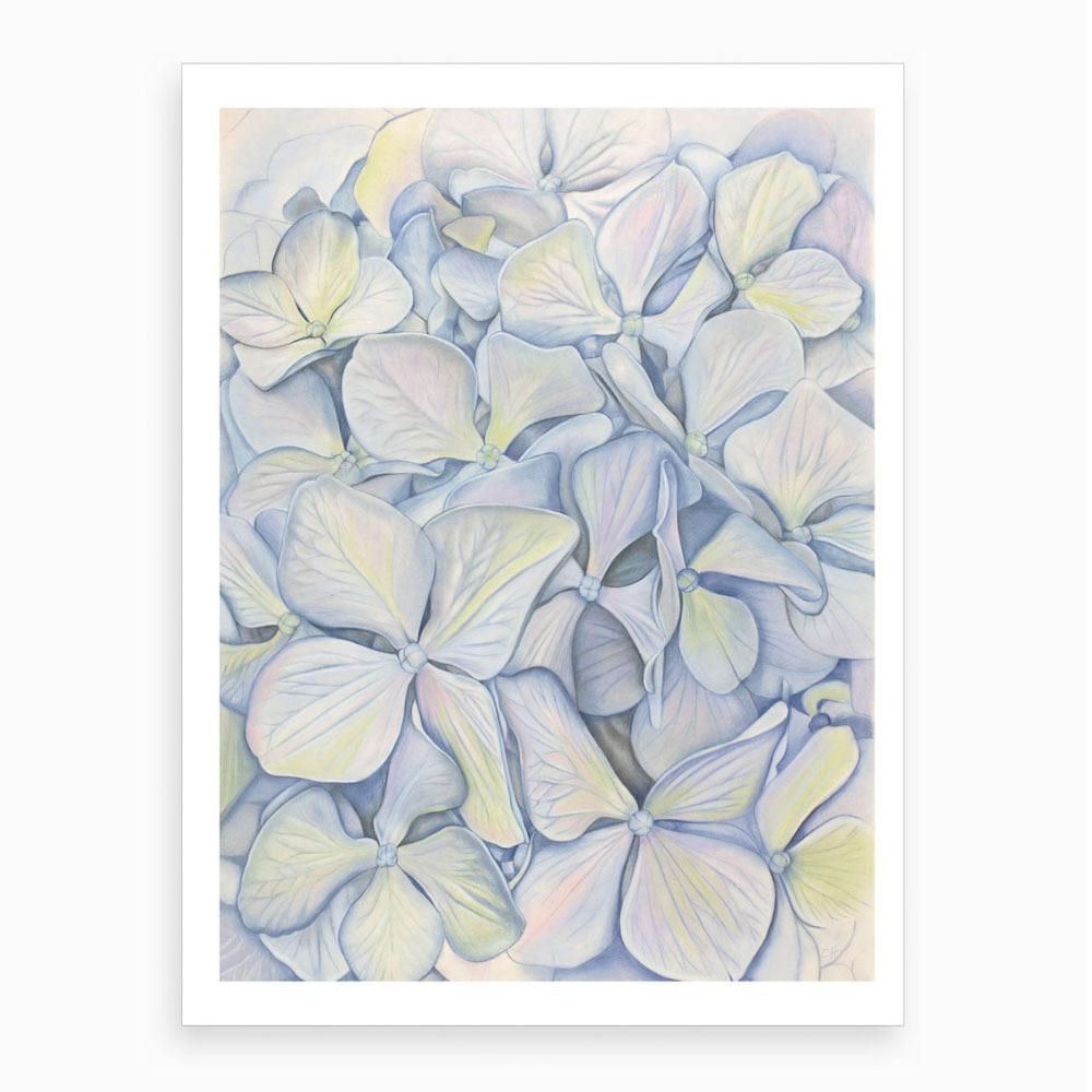watercolour print of blue hydrangea in bloom