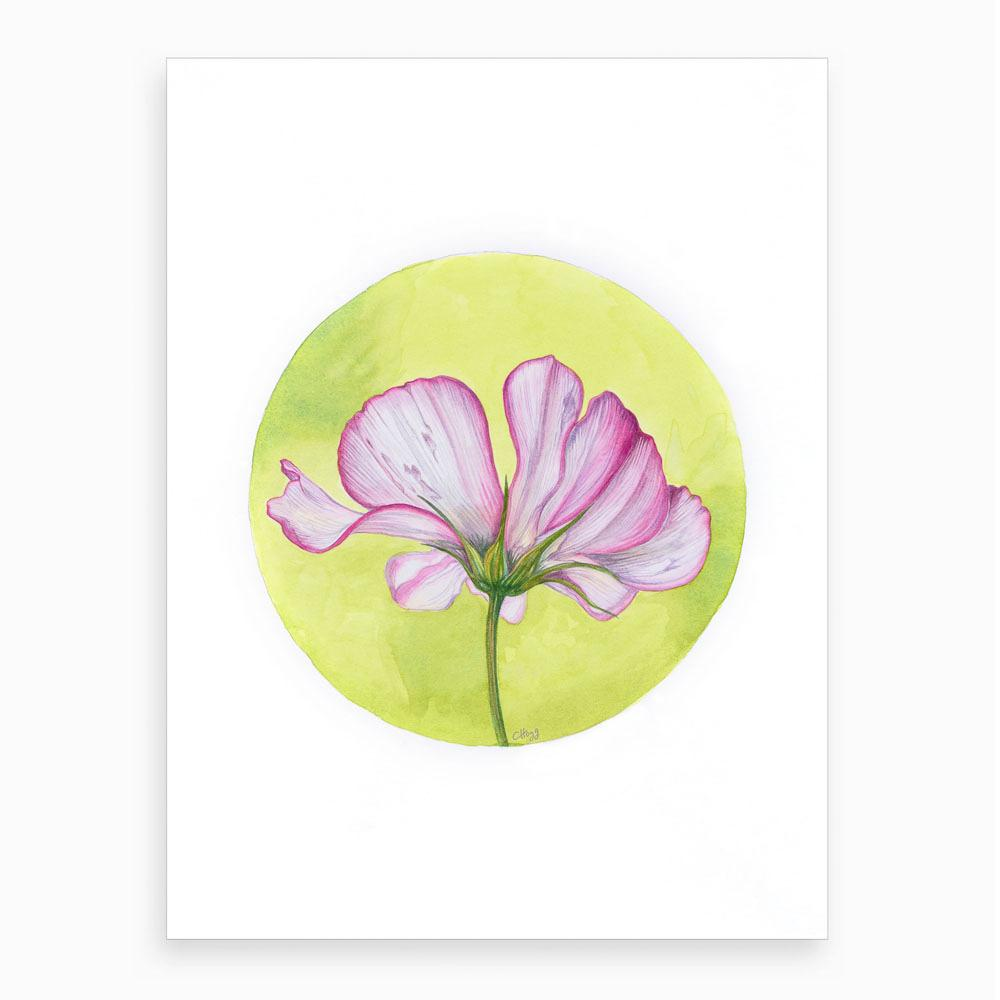 circular watercolour of pink cosmos on a yellow background
