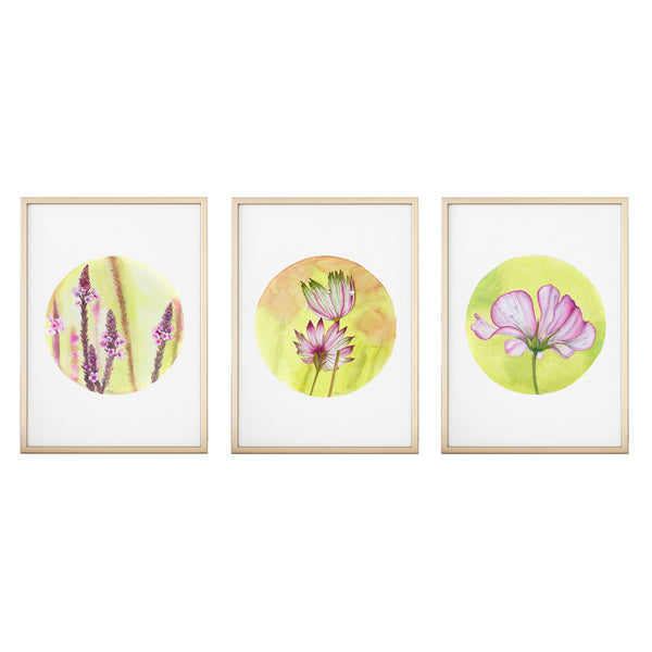 three watercolour circular paints of a verbena astrantia and cosmos in pink green and yellows