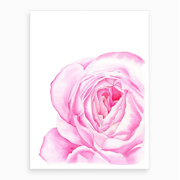 watercolour print of an english garden pink rose