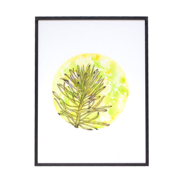 circular yellow and green watercolour painting of a euphorbia