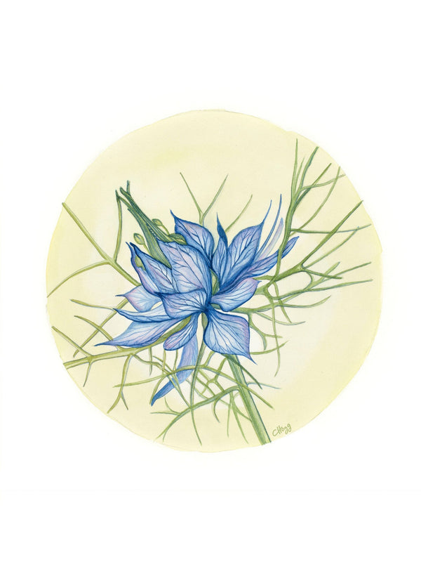 circular watercolour print of a blue love in a mist flower