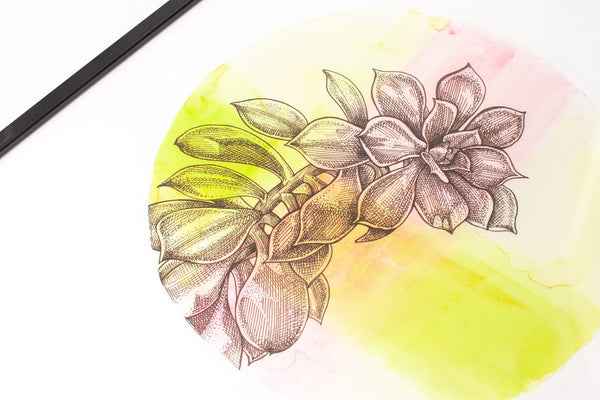 close up detail of circular pink and green watercolour painting of a succulent