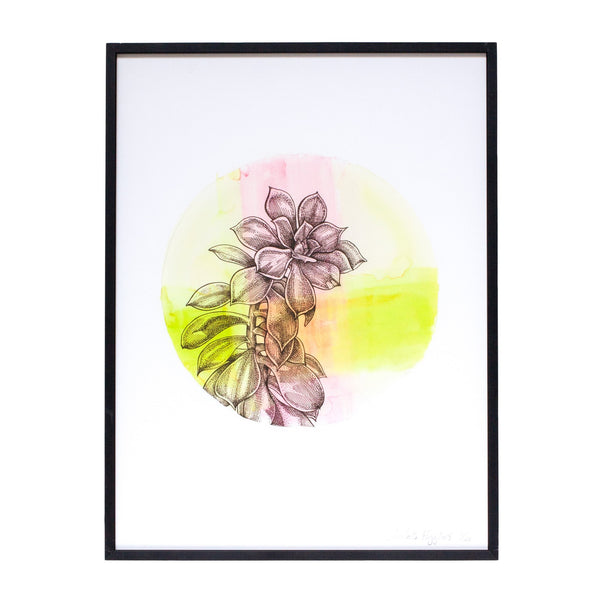 circular pink and green watercolour painting of a succulent