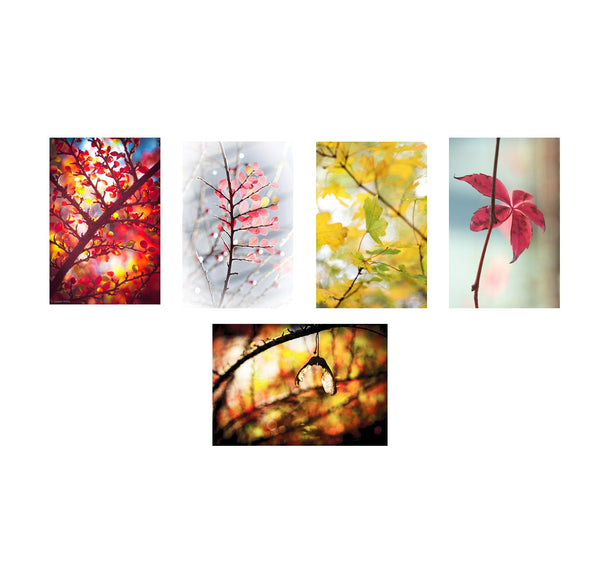 five greeting cards showing different photos of autumn leaves in priory park haringey north london