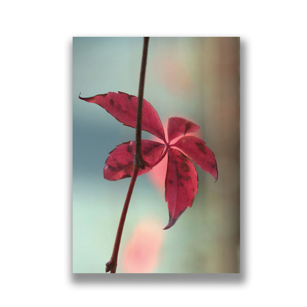 a greeting card showing a virginia creeper leaf taken in priory park haringey north london