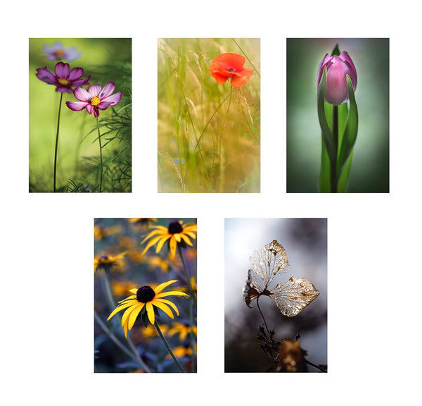 five greeting cards showing different photos of lovely flowers around haringey london