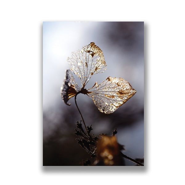 a greeting card of a photo of winter hydrangeas