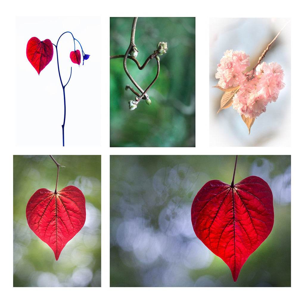 six greeting cards showing different details of red leaves shaped as hearts found across london