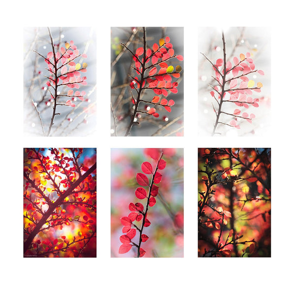 six greeting cards showing different details of red autumn leaves in priory park haringey