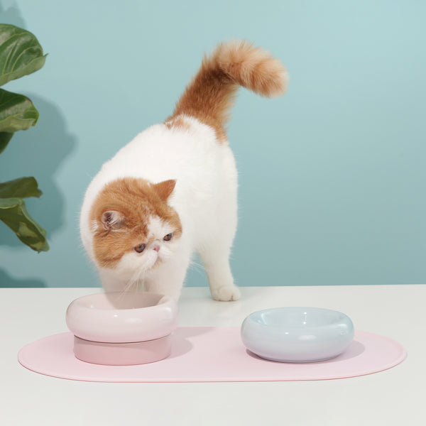 MS! Cat Bowl