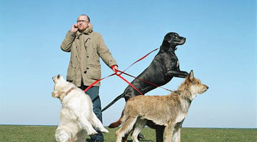 Is The Dog Walker Walking Out With More Than Just Your Dog