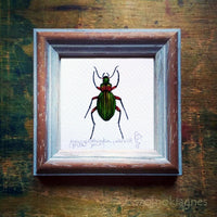 Aranyos futrinka, keretezett mininyomat | Golden Grounded Beetle, Framed Mini Giclée Art Print