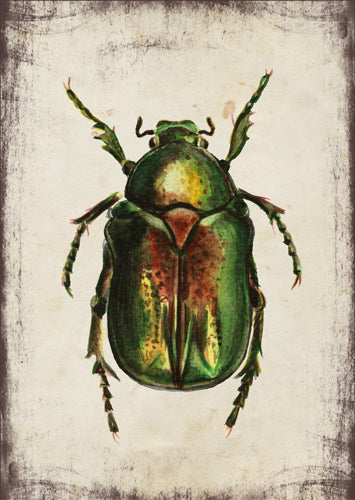 Aranyos rózsabogár - üdvözlőlap | Green rose chafer - Greeting Card