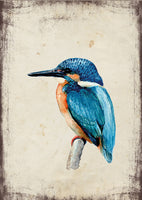 Jégmadár - üdvözlőlap | Kingfisher - Greeting Card