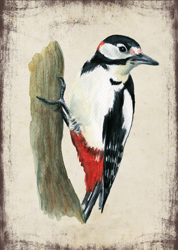 Nagy fakopáncs - üdvözlőlap | Great-spotted woodpecker - Greeting Card