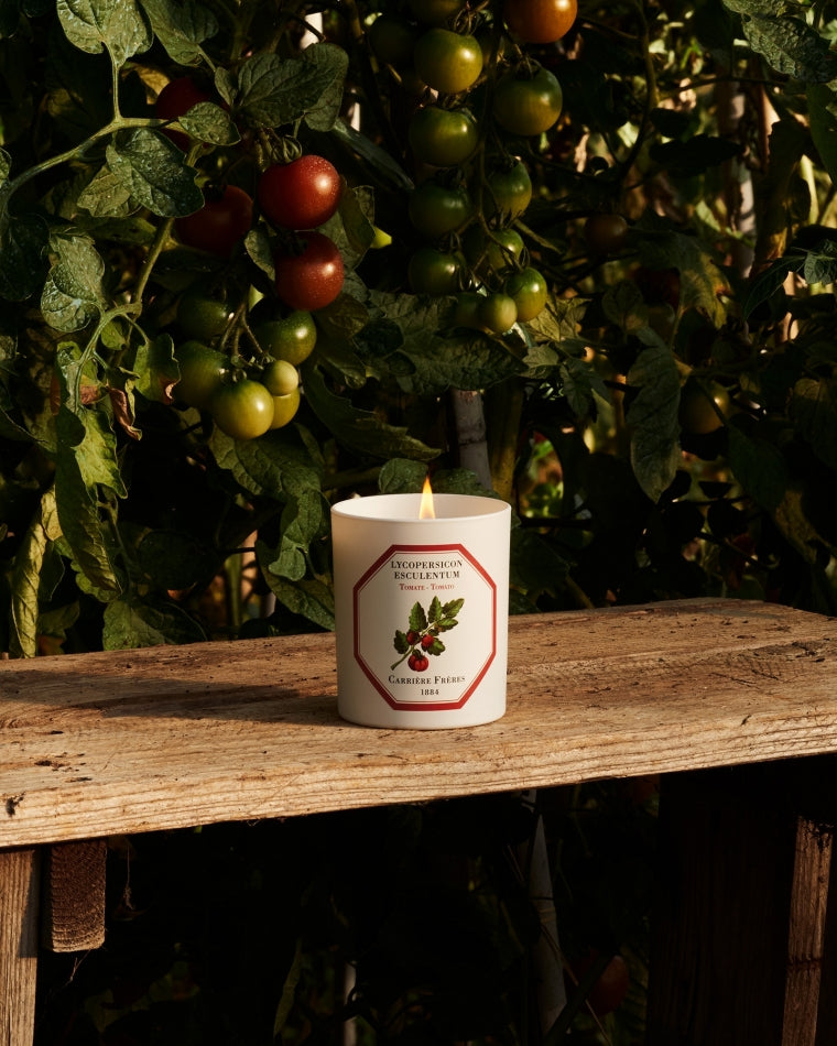 Tomato Candle by Carrière Frères