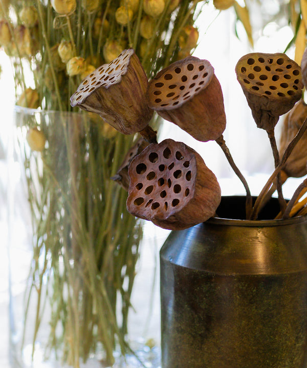 Natural Dried Lotus Pods